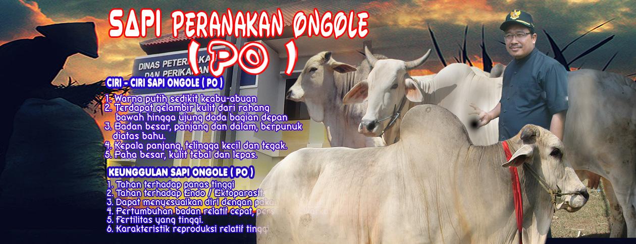 Ayo sukseskan .......<BR>Bojonegoro sebagai sumber bibit sapi PO